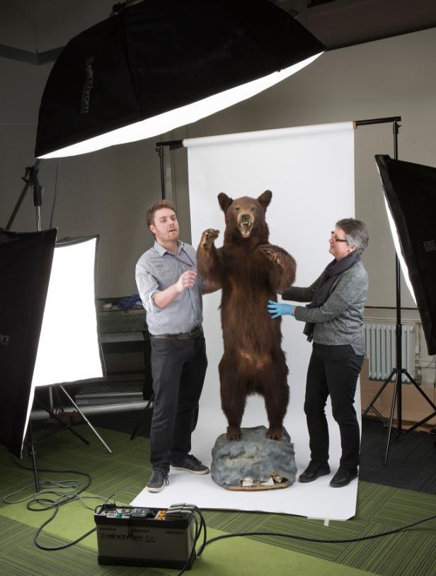 bear-grooming